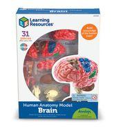 Macheta creierul uman , Learning Resources